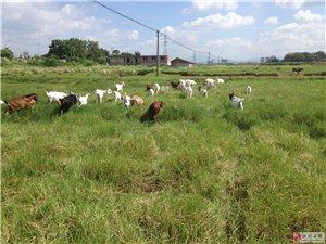 生態養殖場