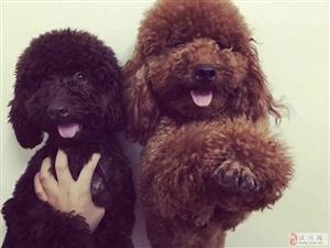 寻狗启示爱犬毛毛