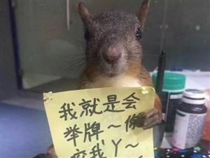 大量出售松鼠