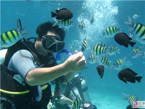 亚龙湾 远海鱼礁潜水