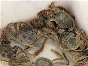 可鲁克湖大闸蟹