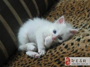 自己家大猫生的最后一只超可爱的小猫咪