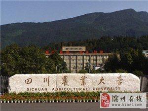 四川农业大学网络教育,招生继续中,抓紧时间报名吧