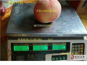 苹果新品种响富苹果苗瑞士红色之爱苹果苗蓬仙13桃苗