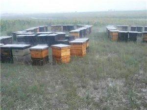 世榮蜂業只出售純天然蜂蜜