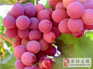 渭南合陽縣大量紅提葡萄出售