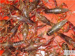 重慶生態小龍蝦合作社歡迎您