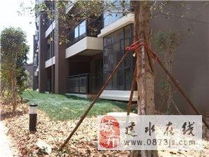 建水广池湖壹号一期一楼(带62平方花园)非电梯房出租  2017A-574