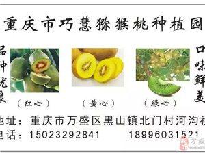 重庆市巧慧猕猴桃种植园