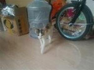特别爱干净的宠物猫