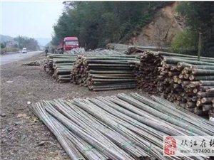 大量收购楠竹
