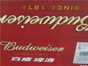 罐裝啤酒優惠出售批發
