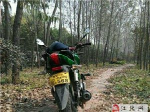 钱江125街车摩托车