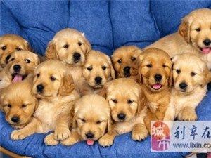收�各�N狗狗,幼崽主要以���B�橹�]�r�g�B狗狗注意