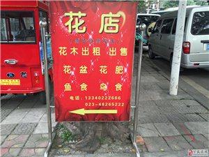 万盛原步行街花店