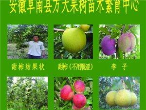 哪里能买到脆柿子树苗?