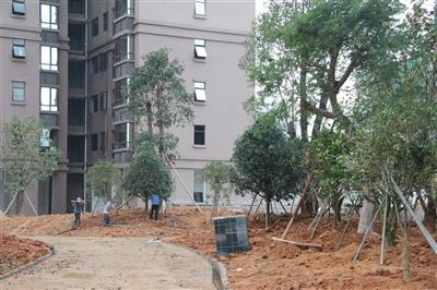 二期中庭园林 12月份工程进度概览