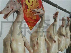 正宗广东烧鸭烧鹅 加盟