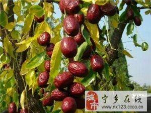 新疆红枣批发零售