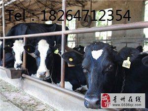 山東肉驢養殖場、助您養殖一路致富