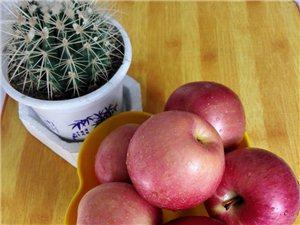 靈寶脆甜高原紅紅富士蘋果 核桃批發零售