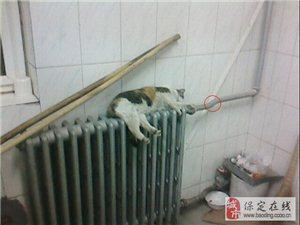 天然气 煤气管  暖气管  安装改造