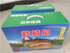 永昌寒家峡正宗金鳟鱼批发零售