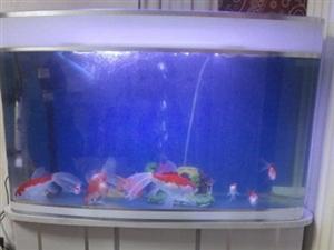 80鱼缸带底座