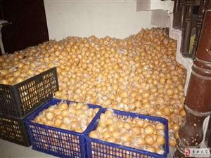 石堤椪柑低價處理只要4毛一斤18696989079