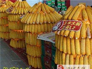怎樣沖出玉米市場低迷困境
