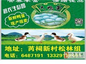 出售土鸭蛋