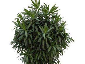 固安花卉綠植出售租擺