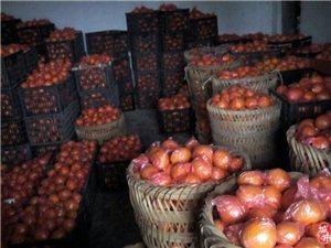 丰都红星 家产大量梨橙待售 批零皆可