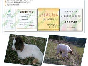 常年金沙游戏种羊、特优羊肉、羊胎盘,原生态纯放养,价格