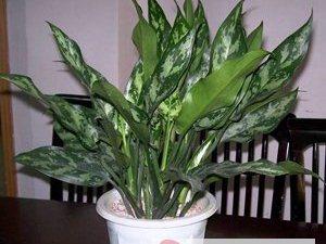 北京花卉綠植租擺銷售公司