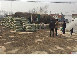 新野劉增偉畜牧業專業打草(兔牛羊家畜)飼料基地