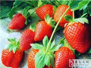 蜜糖草莓采摘园