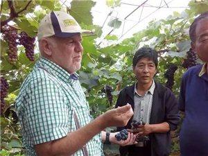 凌源市禾园生态农业有限责任公司出租、出售
