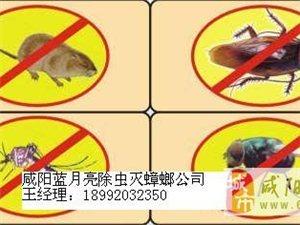 咸阳专业灭蟑螂 灭老鼠 地毯沙发 地面玻璃清洗
