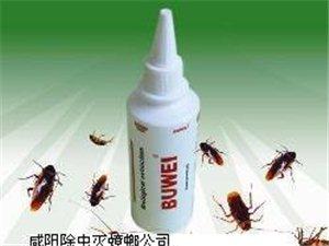 如何灭蟑螂 如何灭老鼠 如何清洗地毯 沙发
