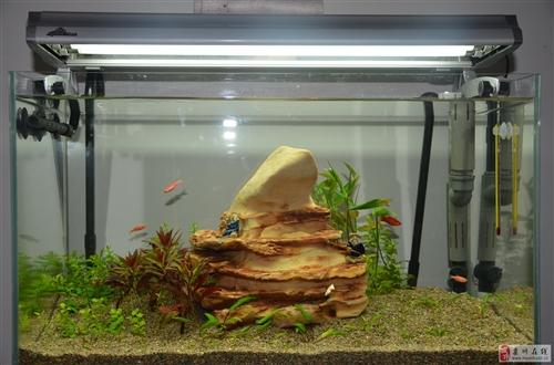 金晶超白鱼缸大暴龙水草灯