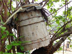 江山市大嶺山土蜂蜜