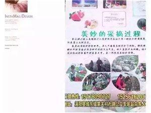 涡阳城东蒙关草莓园大量上市了