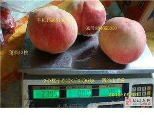山东济宁油桃最新品种中油19桃苗中油20桃苗中油8