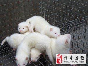 贛州 專業養殖網 養殖籠具 養殖圍欄專業批發定做
