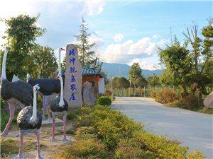 腾冲鸵鸟农庄