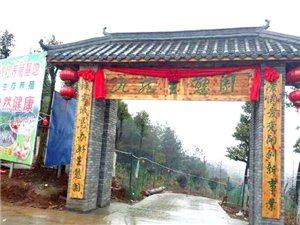 望江县九龙生态园