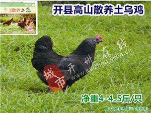 澳门银河娱乐场网址在线高山散养土乌鸡