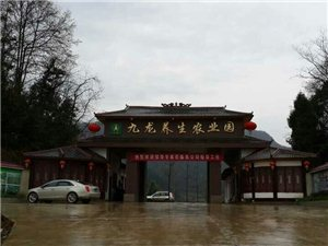 凤冈九龙养生农业园